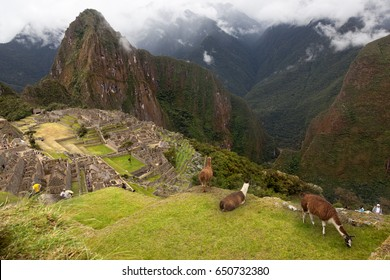 MACHUPICHU-JUNE 4: Spiritual morning mist rises over Inca head mountain at Machu Picchu with Huana Picchu in background in Peru on June 4, 2015