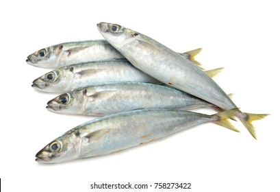 Mackerel fish (Decapterus) isolated on white background