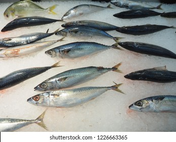 Mackerel fish, Fresh fish for sell on ice in supermarket, Fresh mackerel fish (Scomber scrombrus) on ice,  Mackerel on ice.