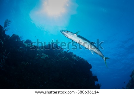6098b2b60aac mackerel fish swimming overhead on a caribbean reef with crystal clear blue  water and sun ball