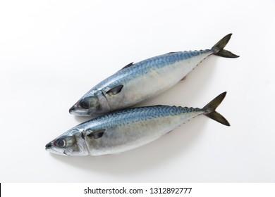Mackerel, fresh fish