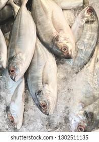 Mackerel in the fresh market