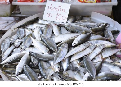 Mackerel in Mahachai Market 100 Baht per kilogram