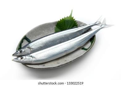 mackerel pike