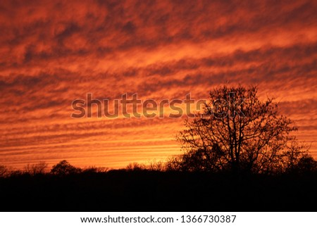 Mackerel sky at sunset; vibrantly colored undulating clouds silhouetted by trees