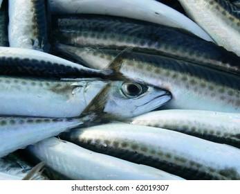 Mackerels - fish market
