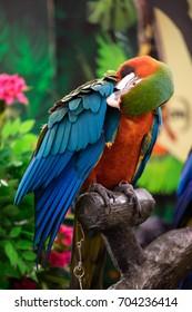 macore bird prottait