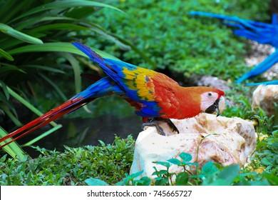 macore bird in safari