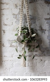 Macrame plant hanger against an exposed brick wall. The wall is white and textured and the plant trails.