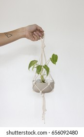 Macrame Plant Hanger . On a white background
