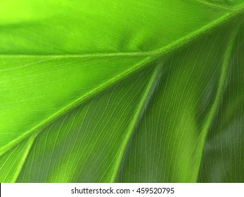 A macro abstract composition of a leave of a beautiful philodendron