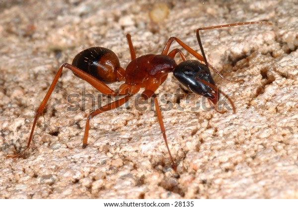 A macro of an ant...