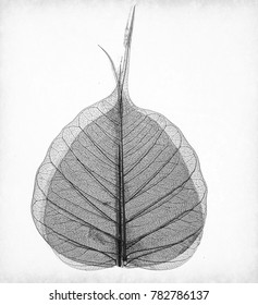 macro of an Asen tree leaf in monocrome
