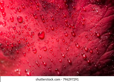 Macro background of water drops on red roses