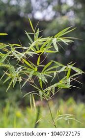 macro BAMBOO tree