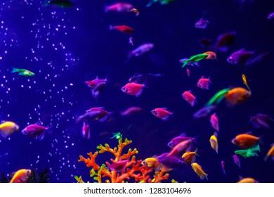 macro beautiful fish glo tetra fish danio rerio сlose up