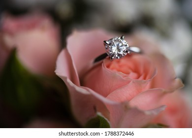 Macro beautiful new shiny white gold engagement ring with big round diamond, placed on the coral rose, blurred background
