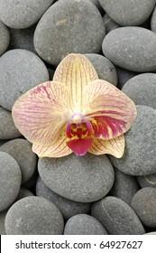 Macro of beautiful orchid flower on gray pebble