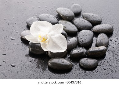 Macro of beautiful orchid on wet pebble