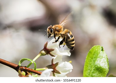 Macro of a bee sitting on an unopened blossom