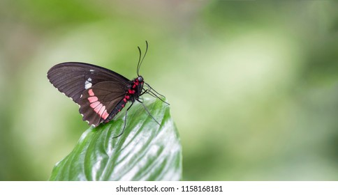 Macro of a black and red butterfly sitting on a green leaf