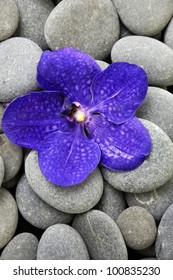 Macro of blue orchid with gray stones