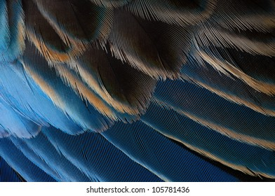 Macro of blue parrot feathers
