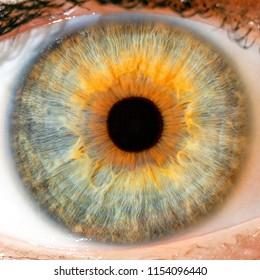 macro blue yellow  eyes , iris pupil , macro eyes .
