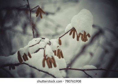 Macro branch of tree covered with snow, winter scenes