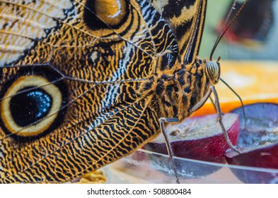 A macro of a brown butterfly