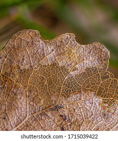 Macro of a brown decomposed leaf letting us see its veins network. A green grass background is present.