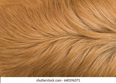 Macro Brown Dog Hair