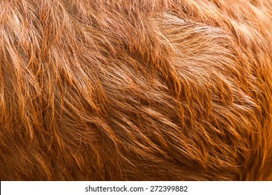 Macro  Brown Goat Hair .Macro with extremely shallow dof