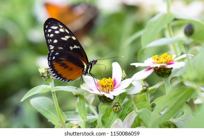 Macro of a brown and orange butterfly sitting on small yellow flowers