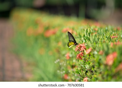 Macro of Butterfly feeding on Nectar