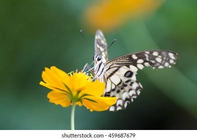 Macro Butterfly on flowers.