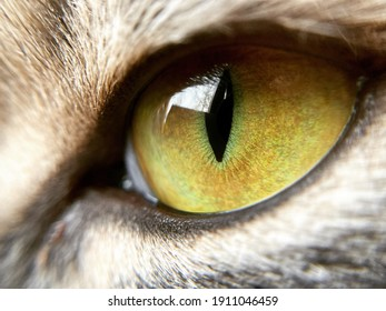 Macro. The cat's eye is like amber.