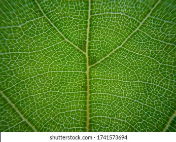 macro cellular tree leaf fractal