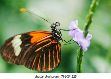 Macro close up of a butterfly pollinating a flower