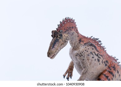 Macro close up Cryolophosaurus dinosaur in attack position with white background mouth close