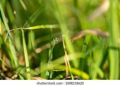 Macro close up on rain drops on green leafs.