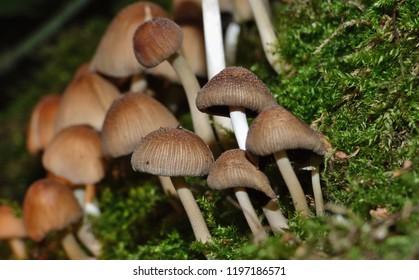 Macro close up shot of Mushroom / Fungus in woodland located in the United Kingdom