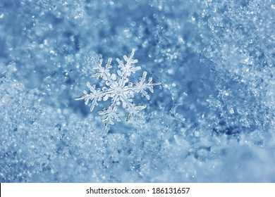 Macro close up from a snowflake in natural surroundings