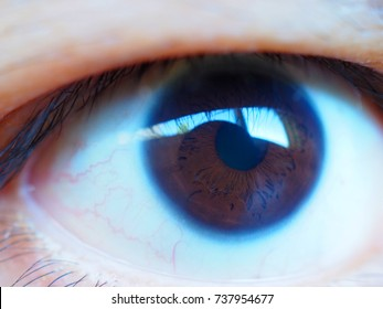 Macro close up Thai Asian Mongoloid yellow skin, black brown eye retina and red blood vein structure pattern on white reflective eye surface, with eyelash, front view, selective focus