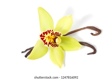macro close up of a wild yellow orchid flower and brown vanilla seed pods arrangement isolated on white