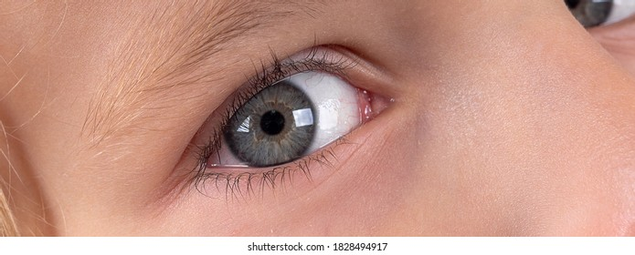 Macro close up young child blonde boys grey eye, blonde eyebrows and brown lashes. Caucasian light skin. Eye health care and medical vision concept. Wide long banner