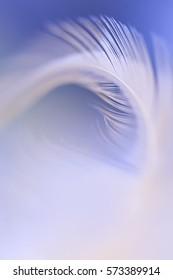 Macro close-up