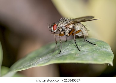 Macro closeup of a common house fly on a leaf
