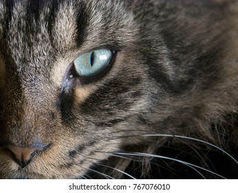 Macro closeup on half of a dark long haired maine coon cat's face with focus on the intense direct stare of it's green eye, with copy space over the fur on the upper right