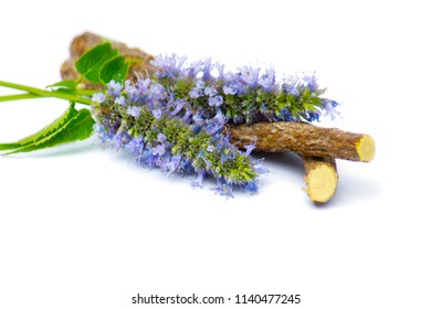 a macro closeup on purple blue aromatic flower cluster bloom of Agastache garden herb and licorice liquorice roots sticks isolated on white